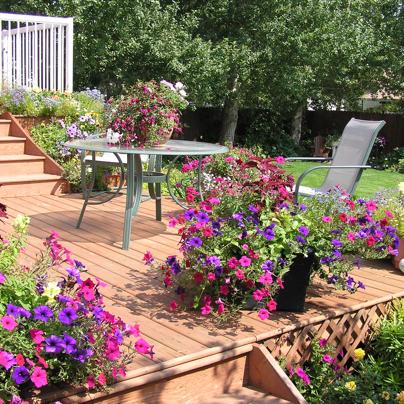 backyard landscaping gardening