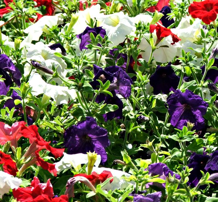 get-ready-to-garden
