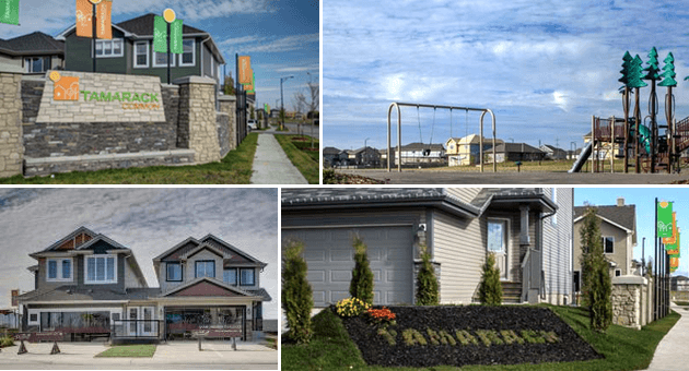 Tamarack Common community collage
