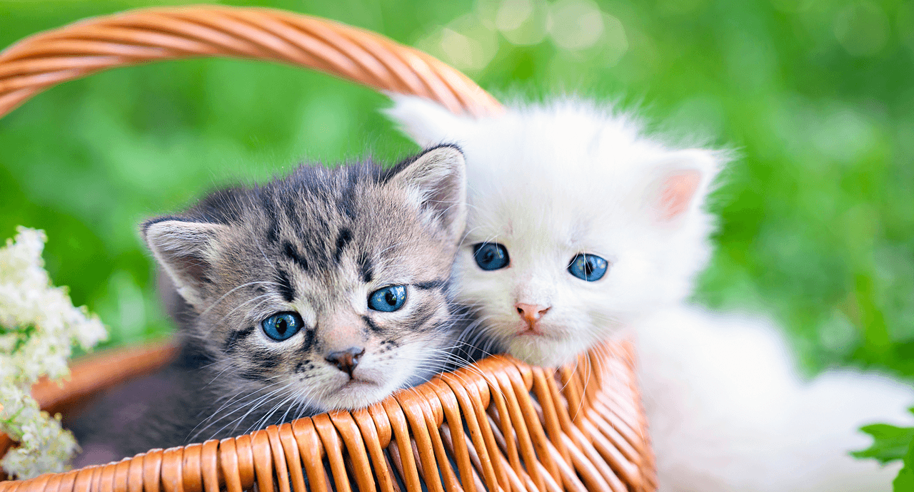 low-maintenance-pets-kittens.png