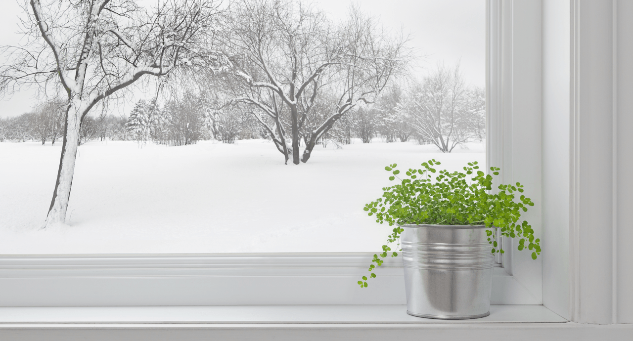 combatting-cabin-fever-winter-window-featured-image.png