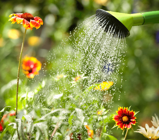 Your Step-by-Step Guide to Starting a Garden Watering image