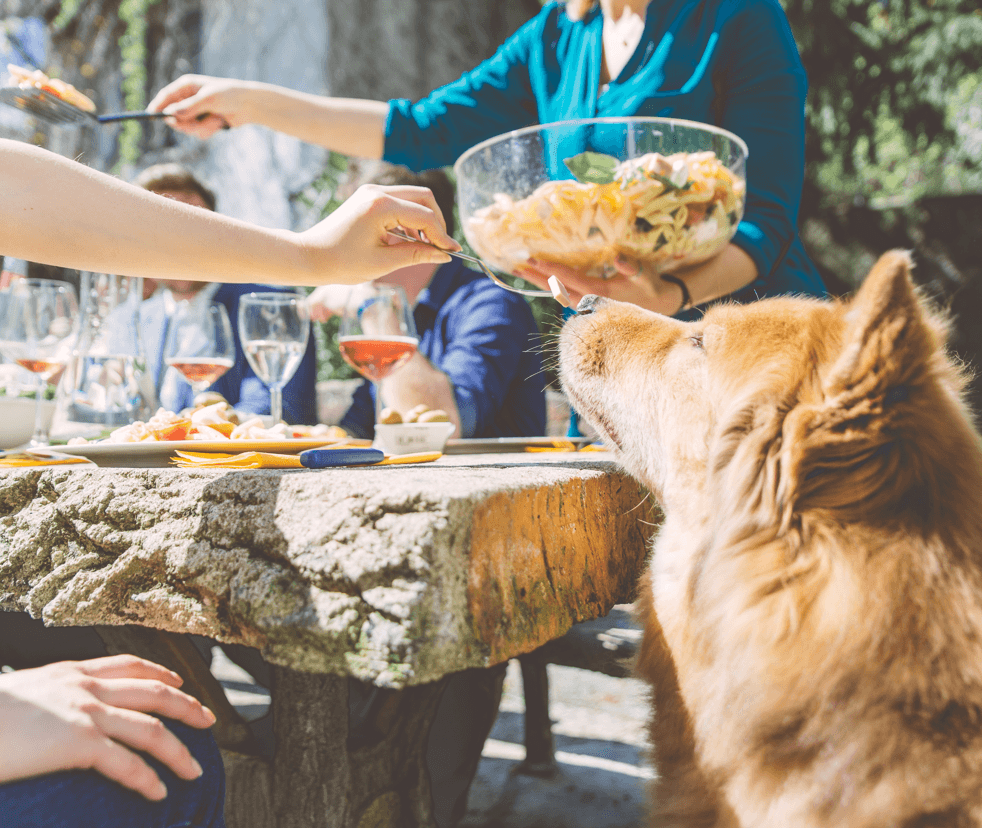 11 Activities for the Perfect Summer Day Dog Image