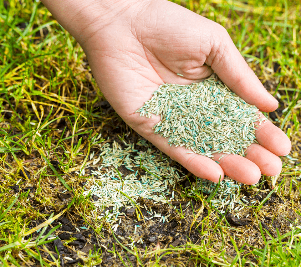 Summer Landscaping Tips and Tricks Grass Seed Image