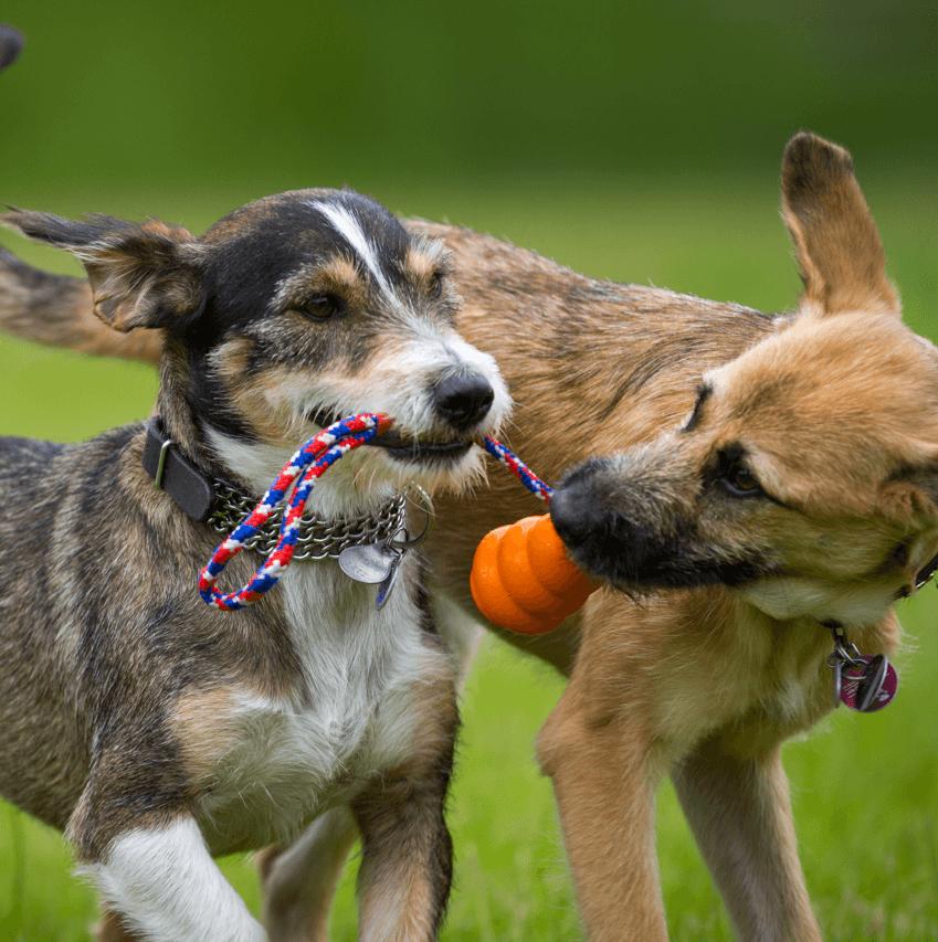 Edmonton's Best Off-Leash Dog Parks Body Image 1