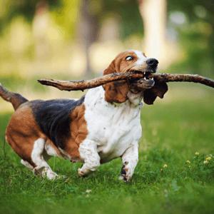 Edmonton's Best Off-Leash Dog Parks Body Image 2