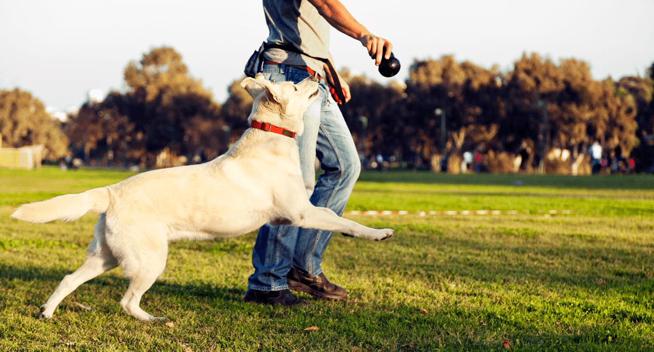 Edmontons Best Off-Leash Dog Parks Featured Image